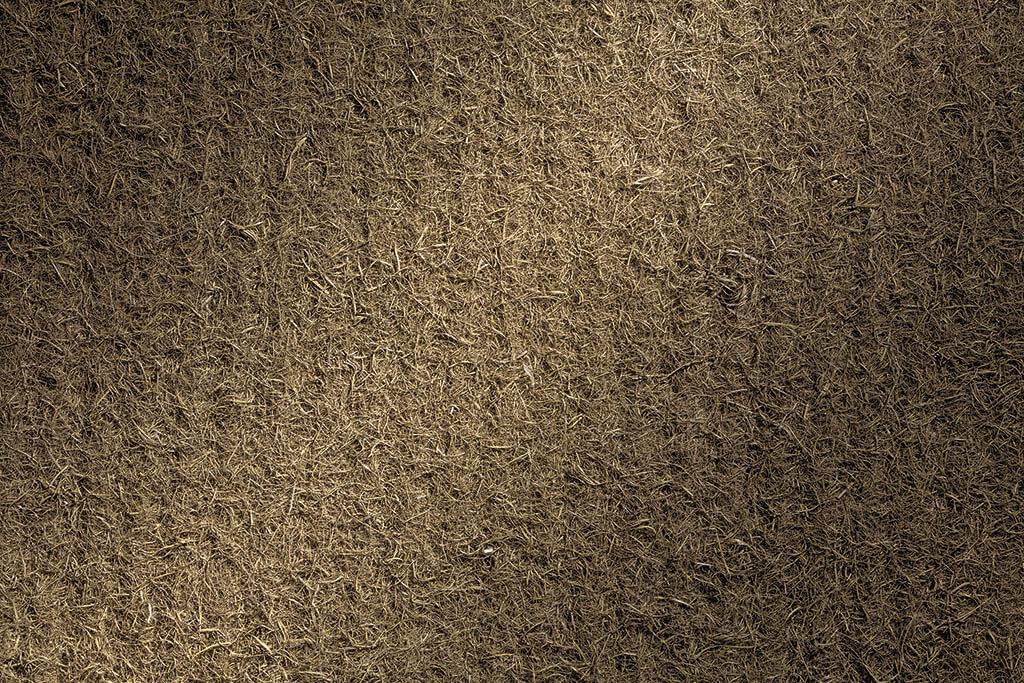 dormiente-Repro-Seegras-Detailansicht